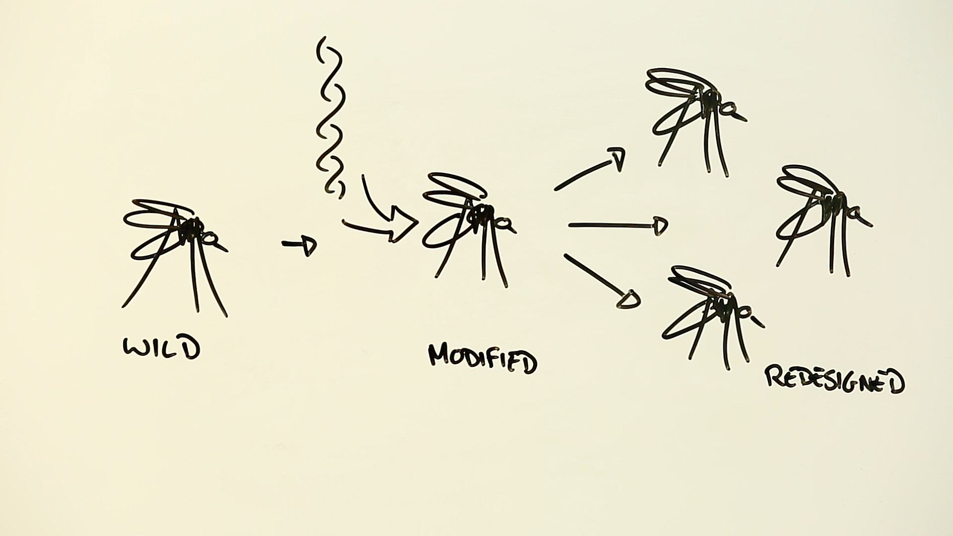 Gene drive - mosquitoes